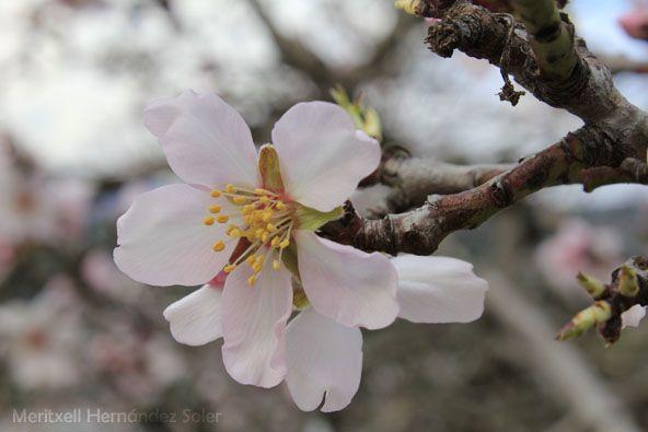 Una flor no fa estiu