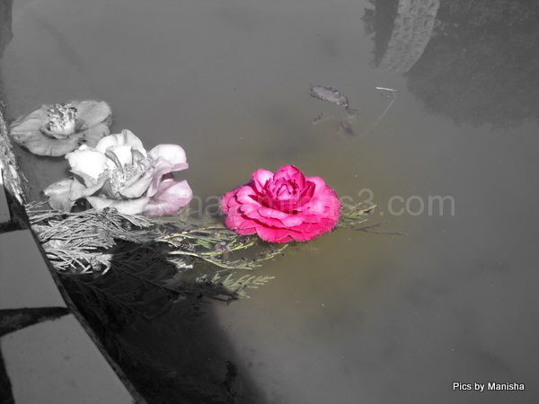 Beauty in a  pond