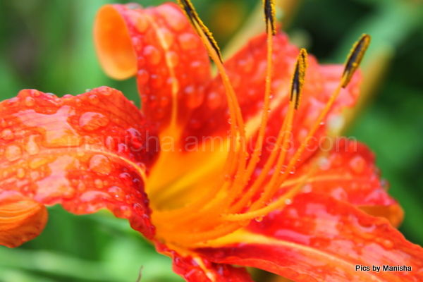 raindrops on a flower