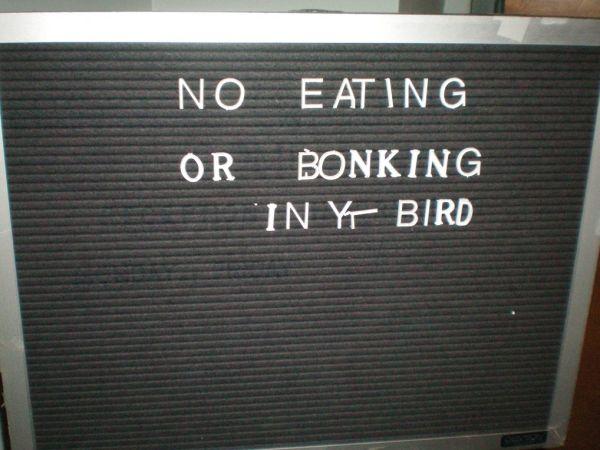 no eating or bonking in yr bird