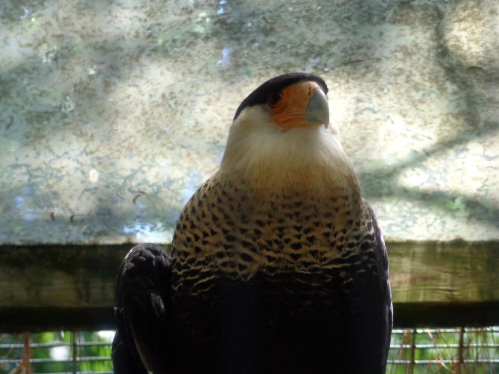 Cape May Zoo