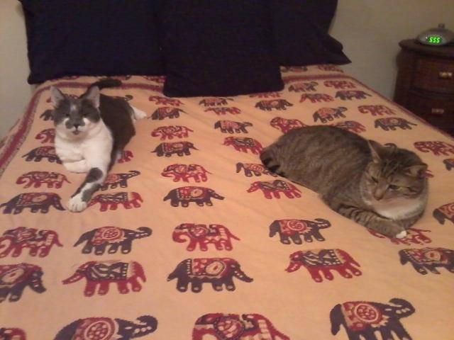 Louie & Viv
