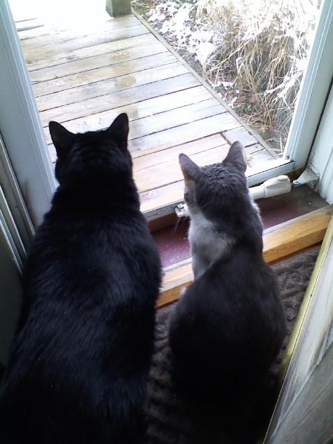 Velvet & Louie