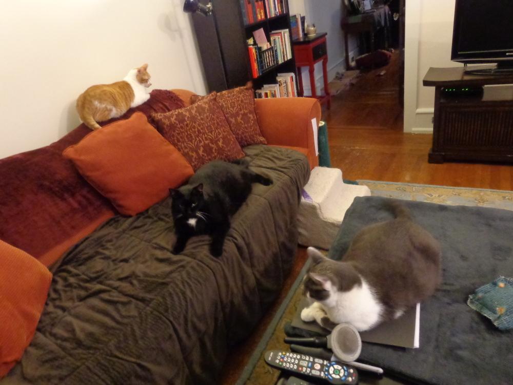 Mauer, Velvet & Louie