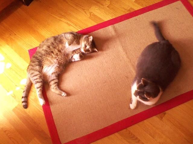 Viv & Louie