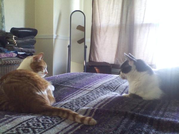 Mauer & Louie