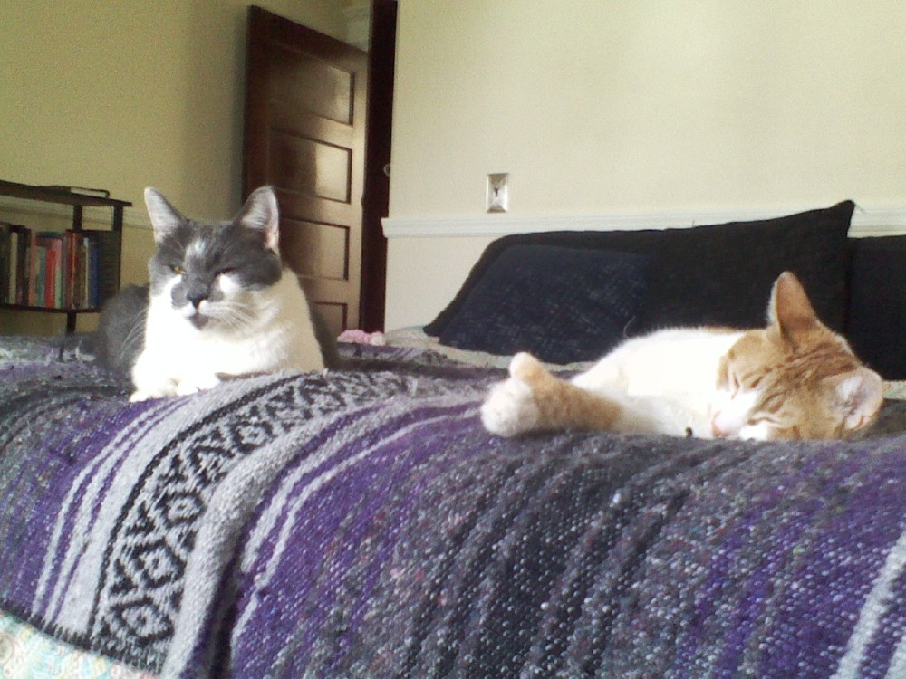 Louie & Mauer