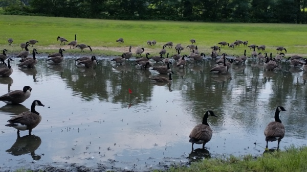 Cooper River Park