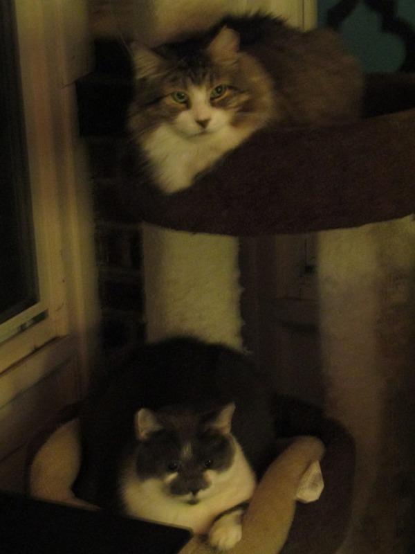Leon & Louie