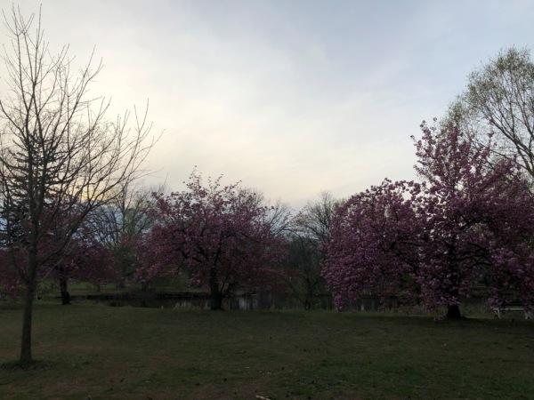 Knight Park