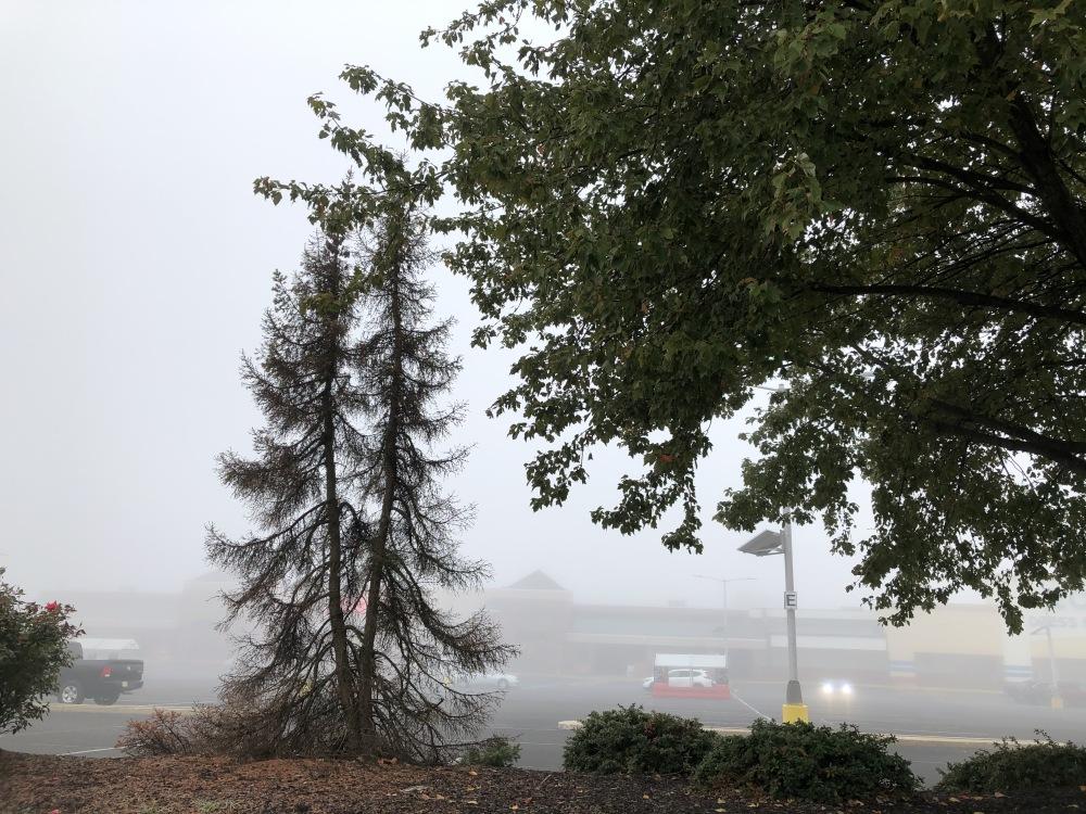 Fog, Voorhees, NJ #1