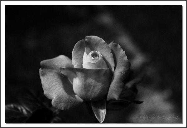 En noir et blanc...