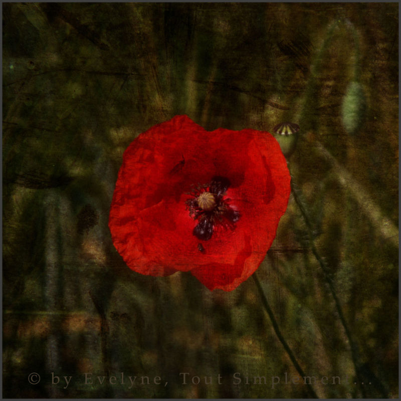 Coquelicot... What else ?