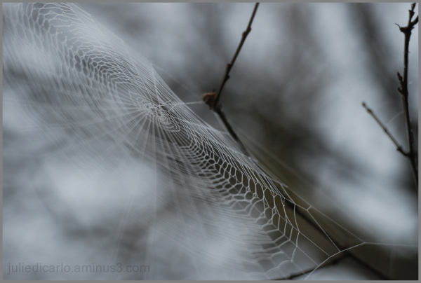 Spider web on a foggy morning
