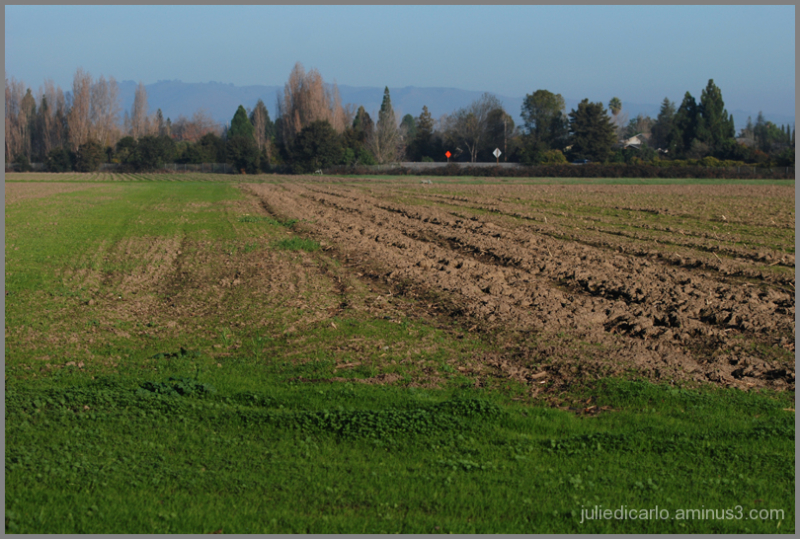 Ardenwood Fields