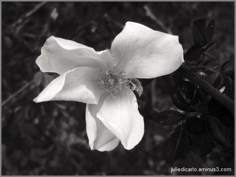 Roadside flower #3
