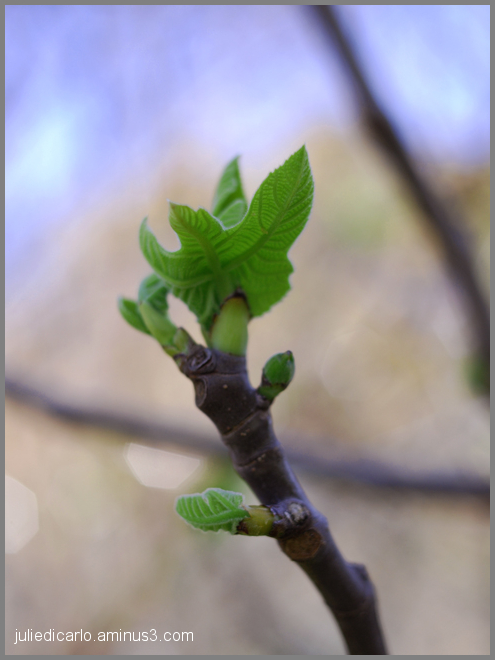The newness of spring #2