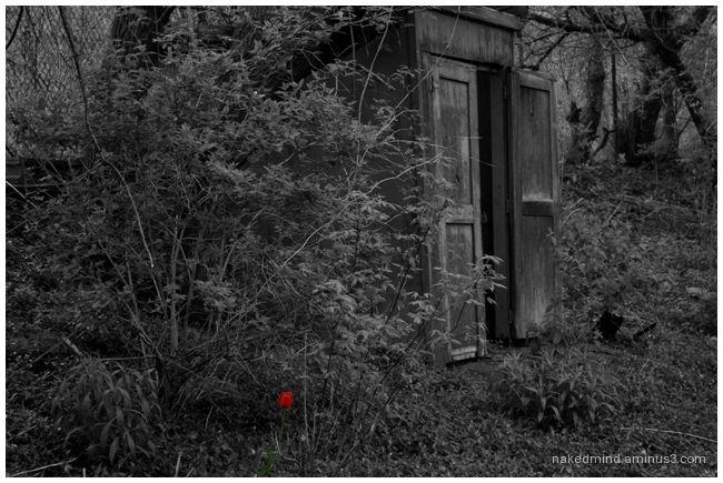 Life Amongst the Ruins