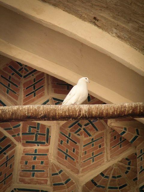 just pigeon!