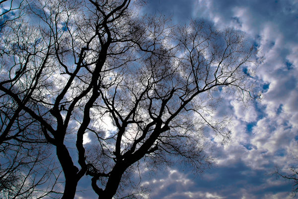 Beautiful blue sky as seen through tree branches