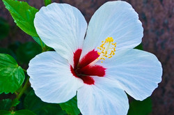 Beautiful flower image from nature