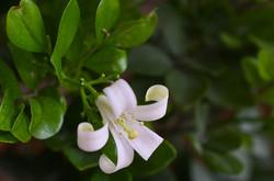 flower fujifilm X100
