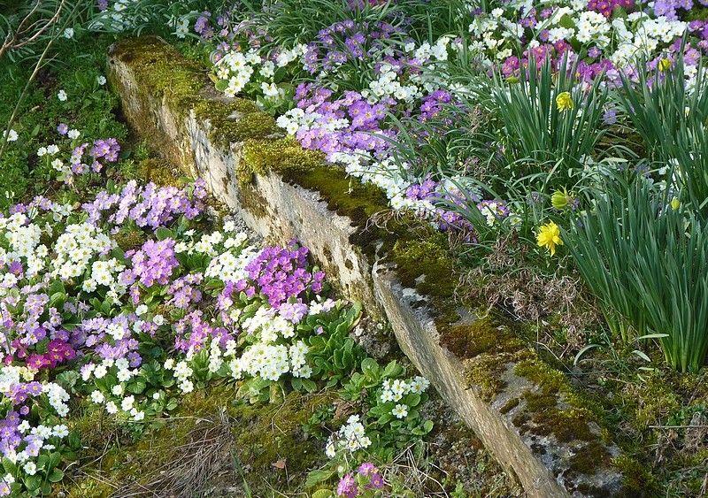 ... serait-ce le printemps ?