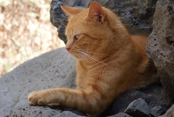 Caché dans les rochers ...