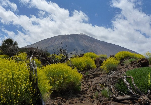 Flore du Teide