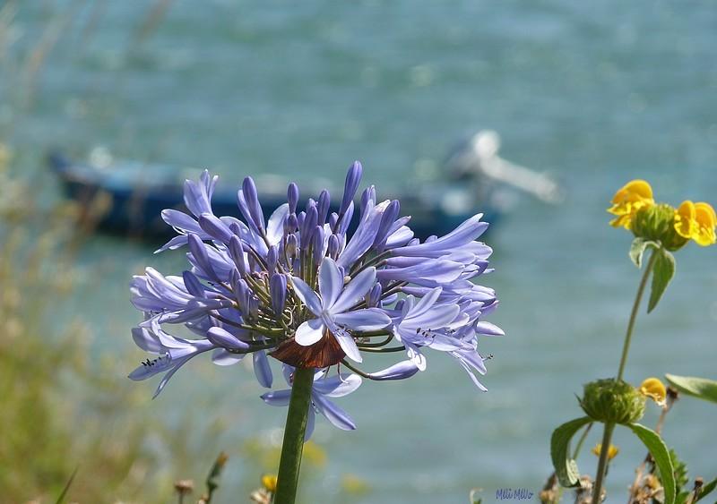 La barque bleue ....