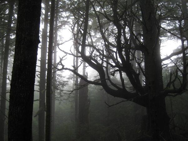 Ghosty Coast (1.30.11)