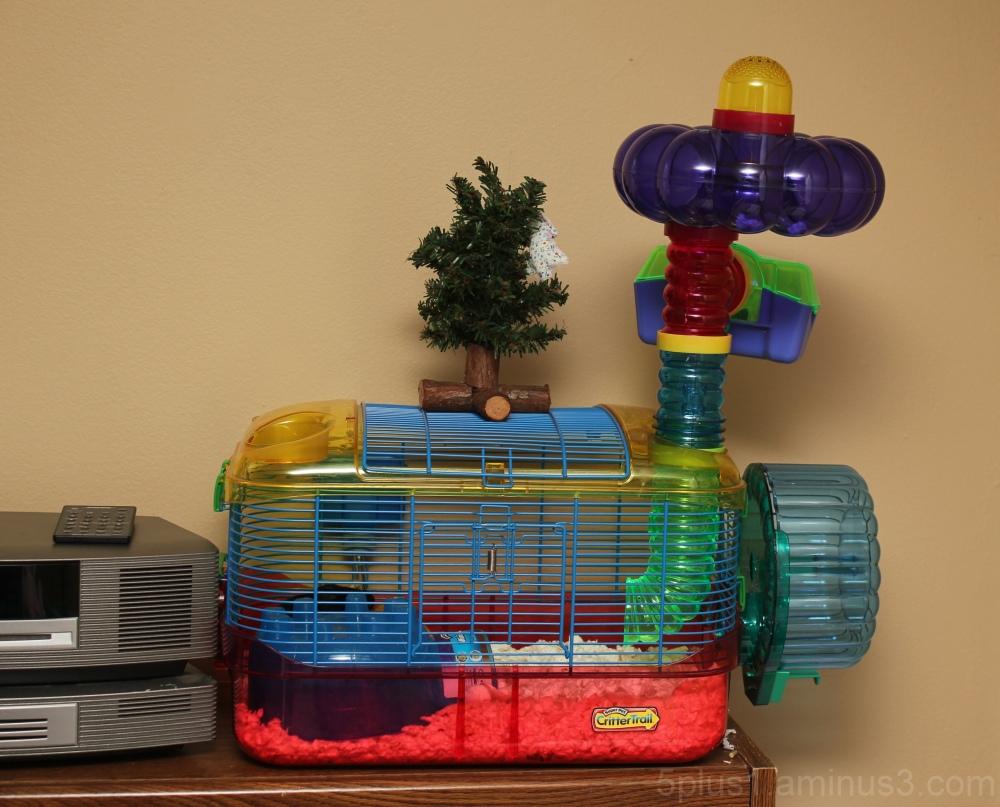Christmas Cage