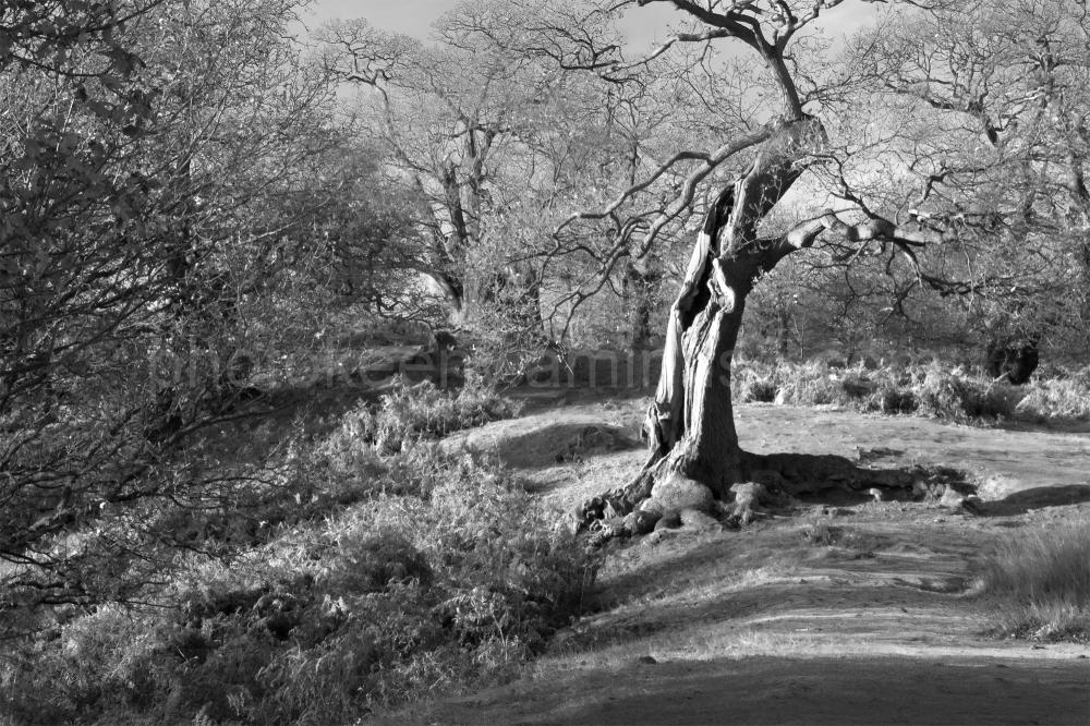 tree 2000
