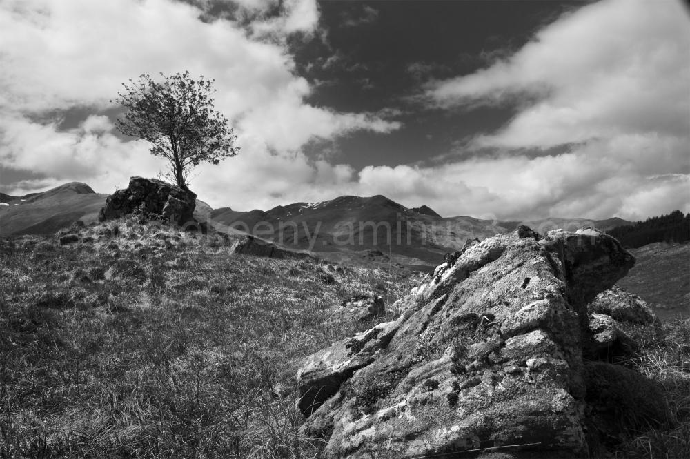 treee rock