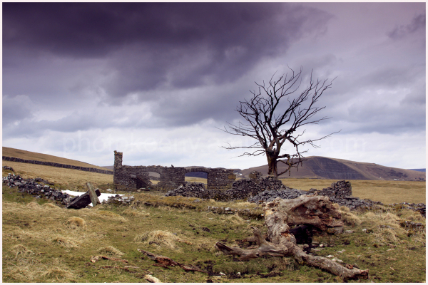 tree with ruin