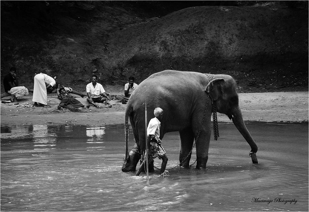 La baignade de l'éléphant....