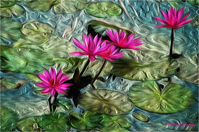 Water lily barbouillés...