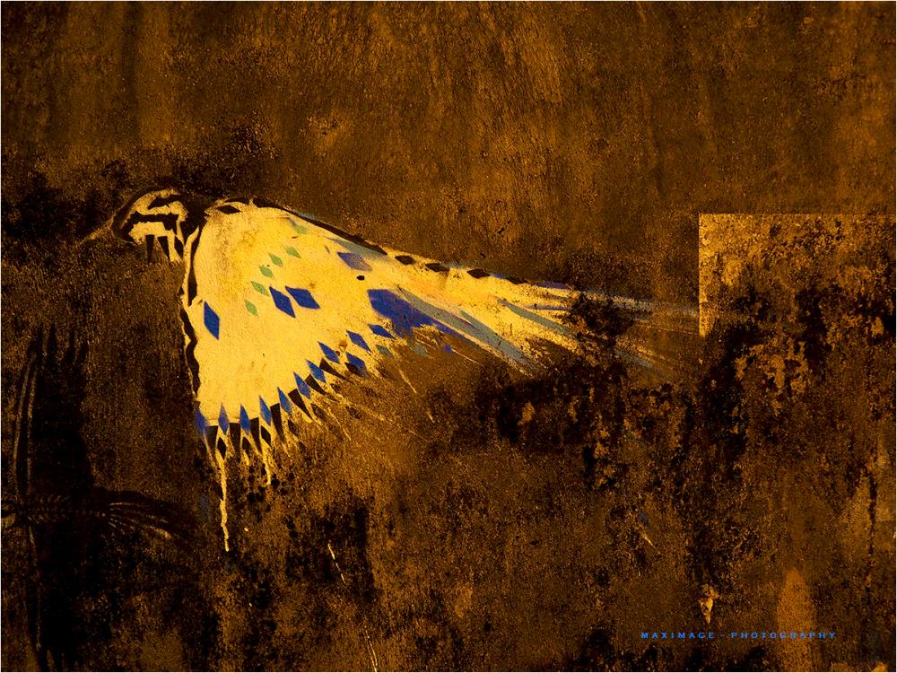 L'oiseau...