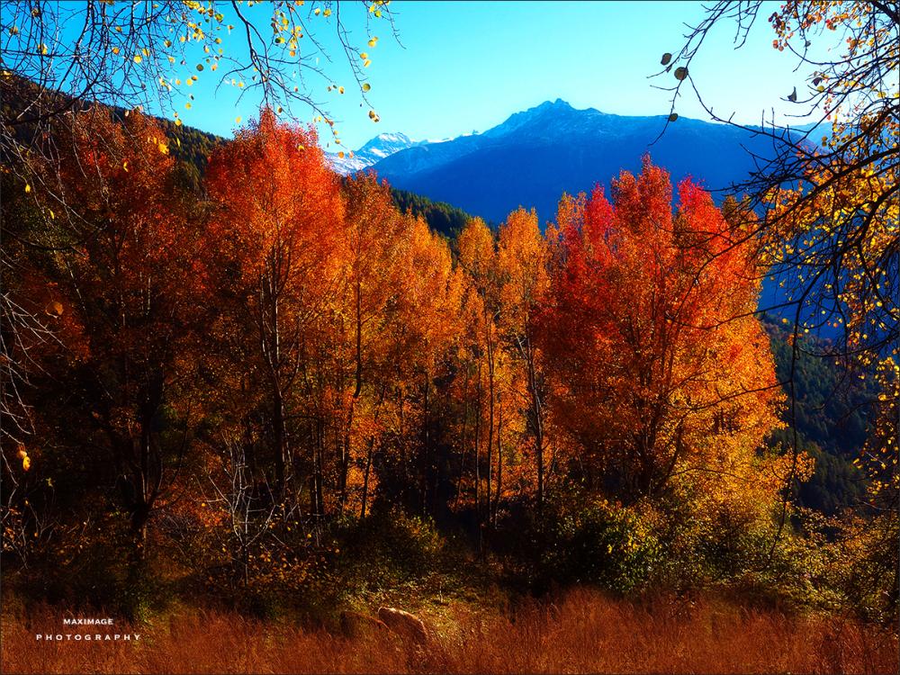 L'automne... c'est pour bientôt !