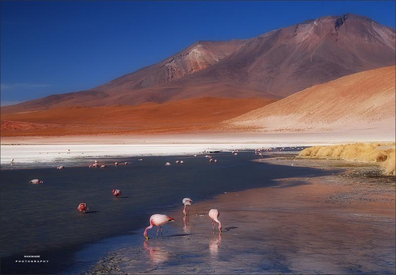 Beautés de l'Altiplano bolivien...