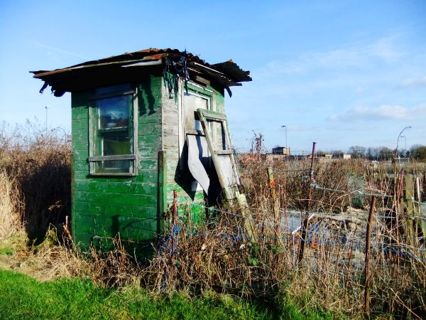 Green shed among weeds in sun