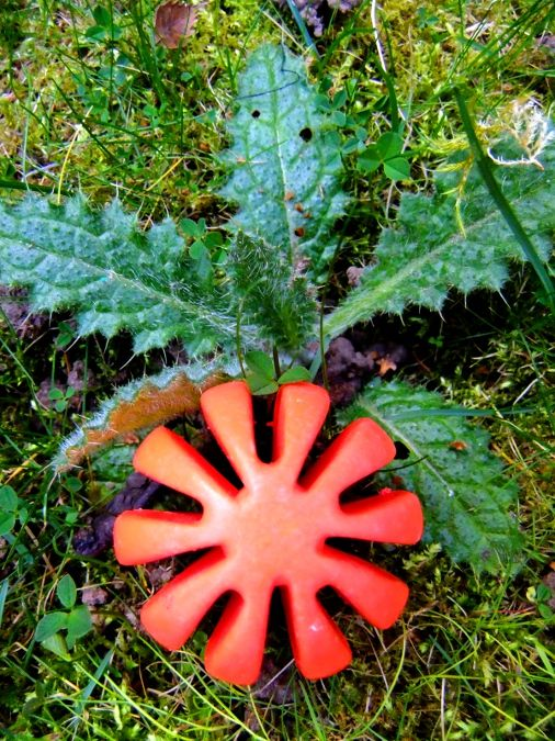 red shaped strange fruit and thistle