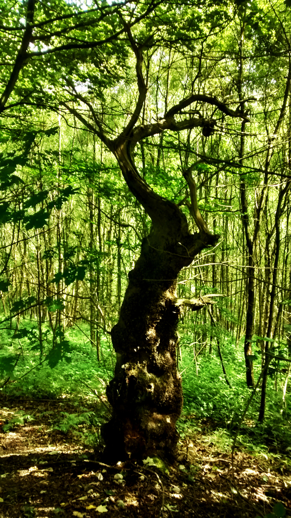 Tree like a headless figure caught mid-dance