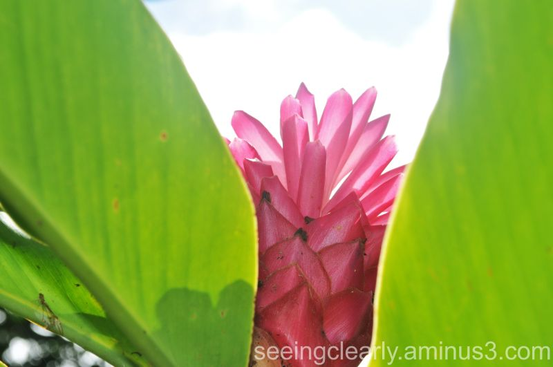 Costa Rican Flowers [4]