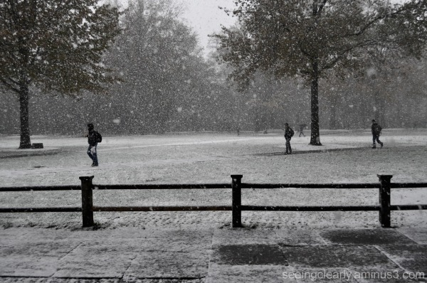 Season's First Snowfall [2]