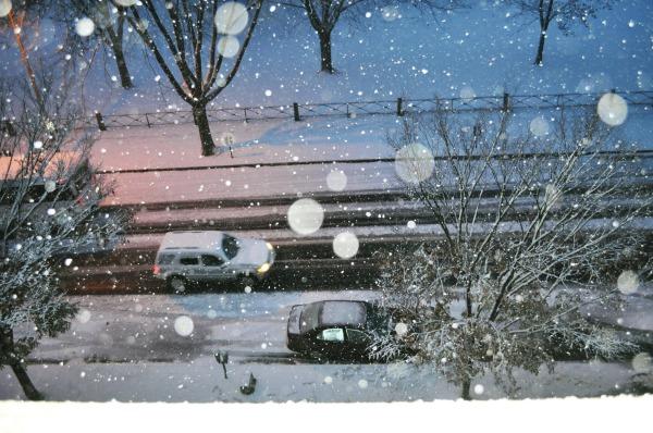 Winter Wonderland [2]