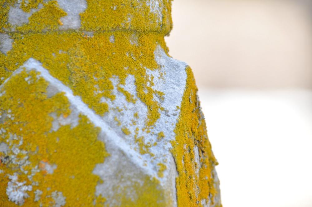 Moss on Gravestone