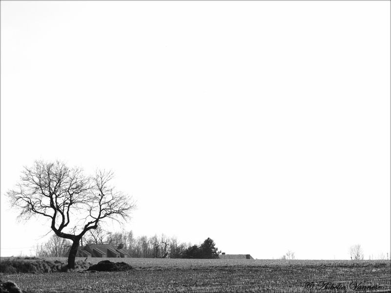 Arbre solitaire, Solitary tree