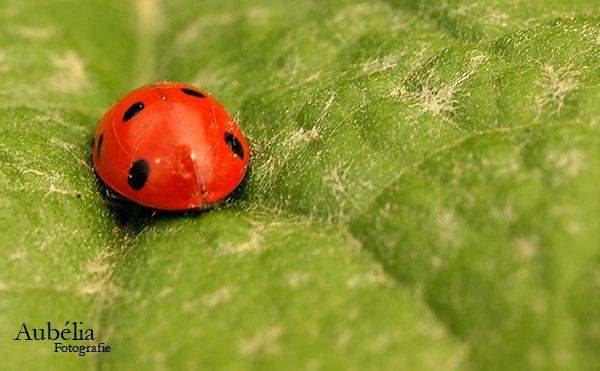 Travel of ladybug