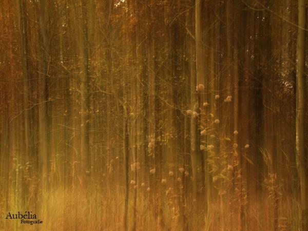 Forest 1 - Moen (BE)